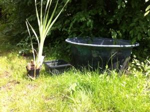 Der Kesselteich bekommt eine Wasserpflanze.