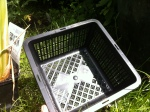 Gittertopf für eine Wasserpflanze