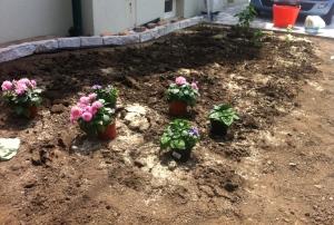 Bis alles wächst, was soll, dürfen ein paar Sommerblümchen die Aufmerksamkeit komplett auf sich ziehen.