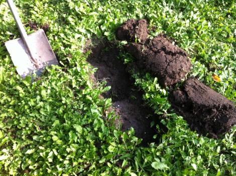 Das Wetter war letztes Wochenende geradezu ideal, um Erdplatten anzuheben. In einer Trockenphase würde ich das grad nicht empfehlen.