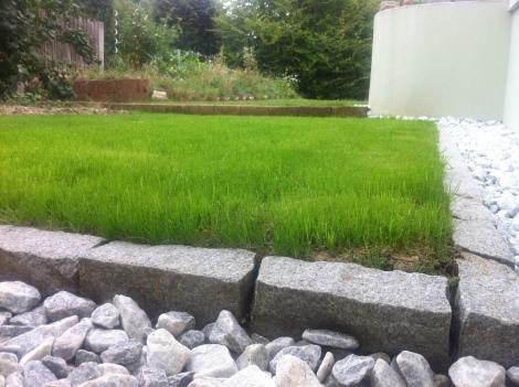 Das ist das Gras, das wir im Höchstsommer gesetzt und gezogen haben. Täglich mehrmals wässern hat sich ausgezahlt.