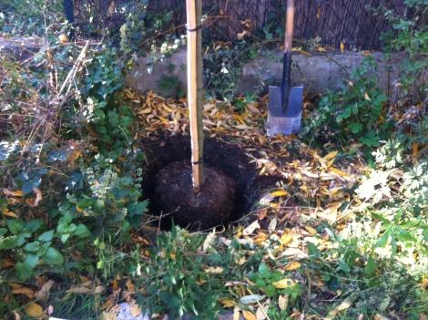 Zuerst wird natürlich erst mal ein Loch gegraben, in das er reinkommt. Das ist für seine Größe gar nicht mal so groß.