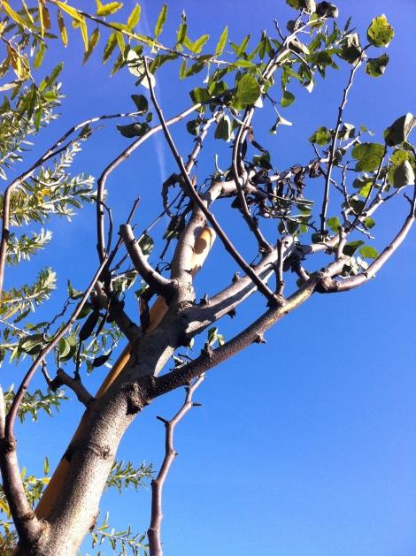 Perfektes Wetter zum Baumpflanzen. Prinzipiell gilt: am besten im Herbst.