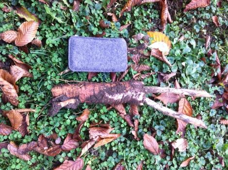 Größer als eine iPhone-Tasche und lustig rosa ist die Kermesbeeren-Wurzel.