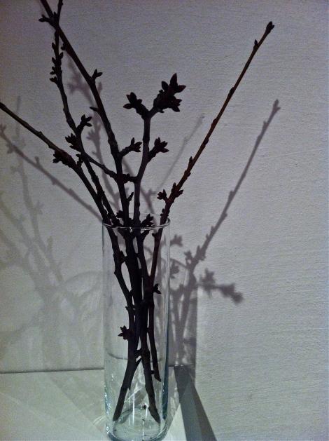 Ob die Kirschzweige so finster sind, weil ich sie in der Finsternis geerntet hab? Hoffentlich geht ihnen bald eine Blüte auf. Mindestens.