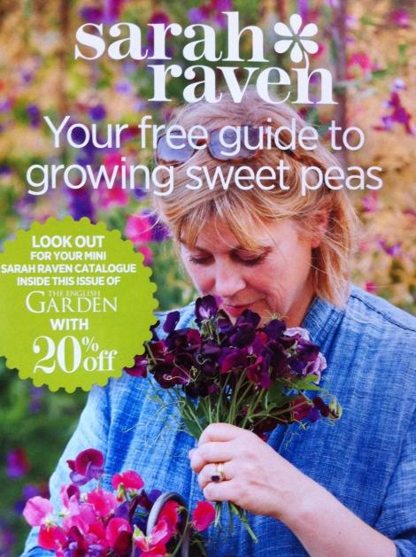 Frau Raven ist anscheinend eine echte Duftwicken-Liebhaberin und zeigt, wie sie's macht.