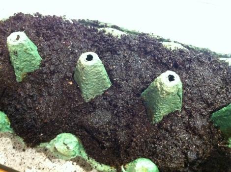 Der Hintergedanke ist, dass wenn die Samen die angefeuchtete Fläche nur berühren, bleiben sie sofort darauf kleben.