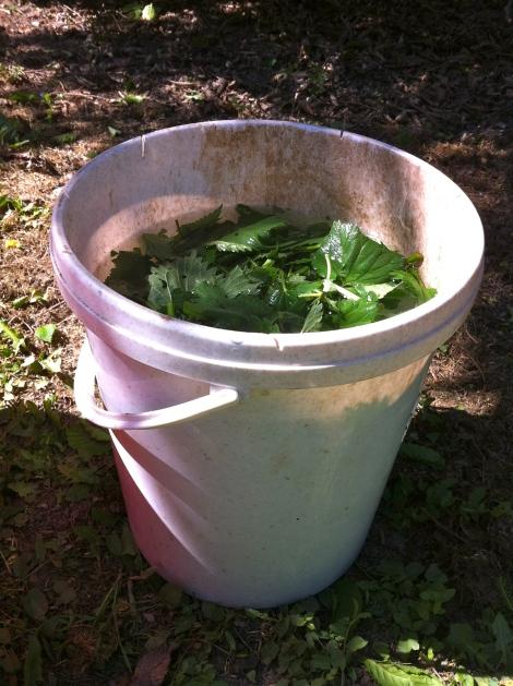 Vielleicht würden 5 l zum Bedecken reichen, wenn man die Pflanzen noch feiner zerkleinert? Das probier ich dann beim nächsten Mal.