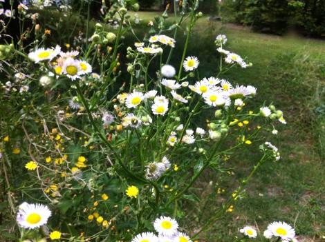 Die gibt's überall im Garten und natürlich besonders hier im Wildbereich.