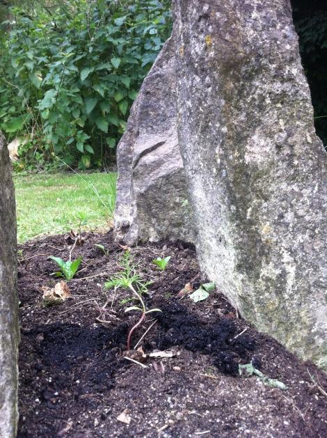 Jetzt kann Stonehenge schön grün werden.
