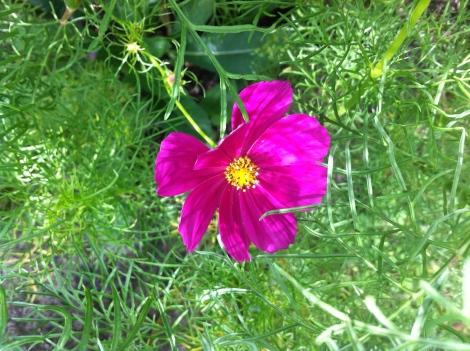 Ganz unten am Boden hat sich auch noch eine Blüte versteckt.