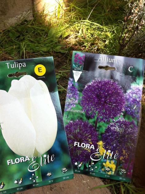 Heuer hab ich mich für lila Zierlauch und weiße Tulpen entschieden.