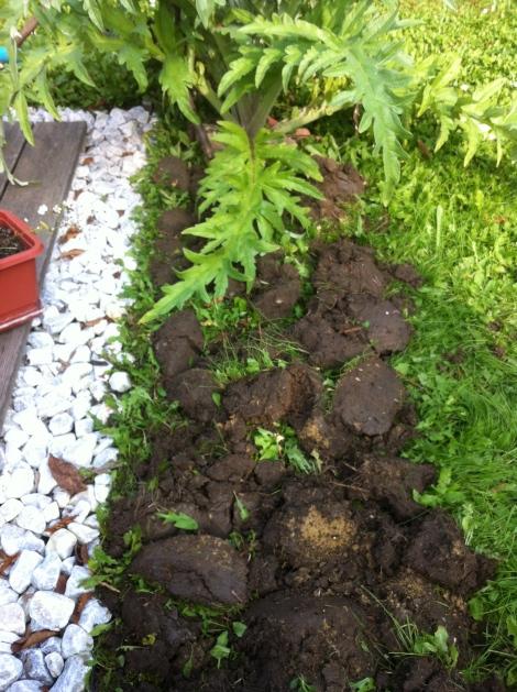 Die Unkrautwiese umgraben, so das unten oben wird und umgekehrt.