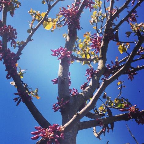 Natürlich ist es noch ein kleiner Baum, aber schön ist er freilich trotzdem schon.