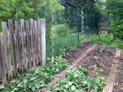 Ab ins Beet mit dem Gemüse. Danach wird mit Brennnesseln gemulcht. Davon hab ich nämlich genug im Garten.