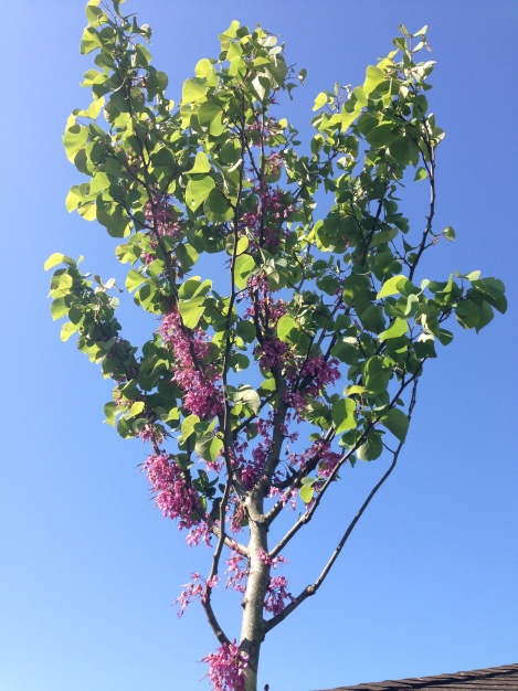 Diese wunderschöne Pflanze gibt es übrigens auch als Strauch.