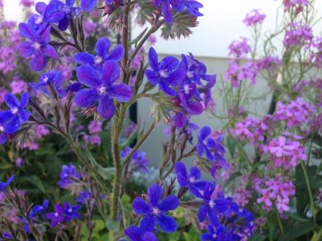 Diese Blüten sehen nicht aus wie aus, als wären sie aus Marzipan. Sondern erinnern an Zuckerblumen.