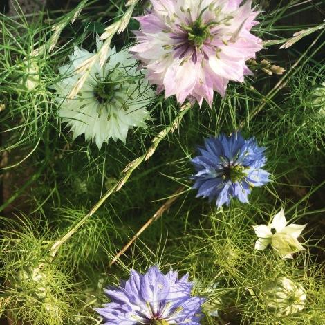 Ich finde, die Jungfer sieht aus, als ob jemand gesagt hätte: Jetzt überlegt euch mal wie eine Blume noch aussehen könnte. Wir brauchen ein Re-Design.